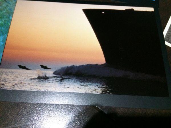 最終閉店処分!ビンテージポストカード 可愛い愛らしいイルカとアシカ,アザラシ? 18点_画像6