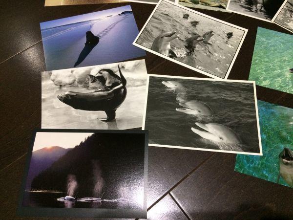 最終閉店処分!ビンテージポストカード 可愛い愛らしいイルカとアシカ,アザラシ? 18点_画像4