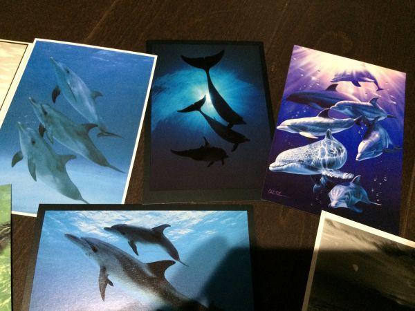 最終閉店処分!ビンテージポストカード 可愛い愛らしいイルカとアシカ,アザラシ? 18点_画像8