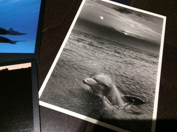 最終閉店処分!ビンテージポストカード 可愛い愛らしいイルカとアシカ,アザラシ? 18点_画像7