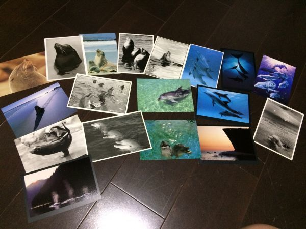 最終閉店処分!ビンテージポストカード 可愛い愛らしいイルカとアシカ,アザラシ? 18点_画像1