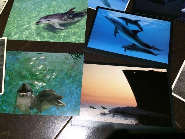 最終閉店処分!ビンテージポストカード 可愛い愛らしいイルカとアシカ,アザラシ? 18点_画像5