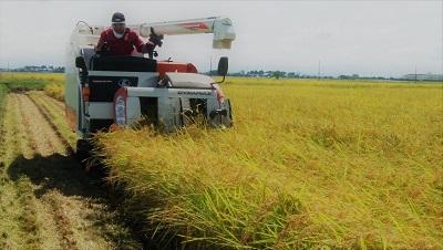 【令和2年産】 農薬約9割減 新潟県認証 特別栽培米コシヒカリ 真空包装玄米5kg_画像2