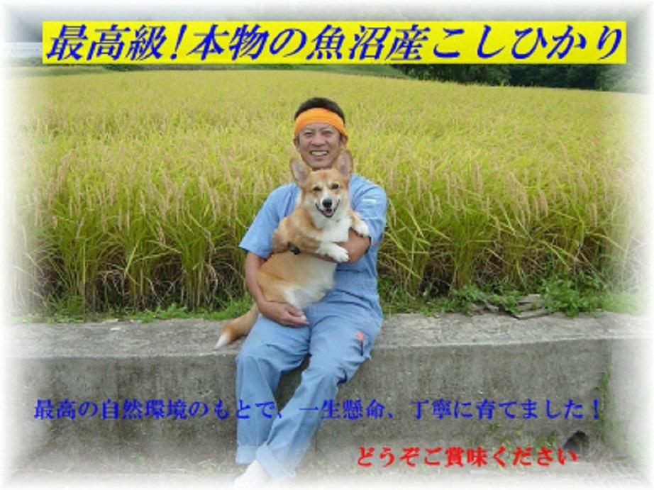 農家直販!!新米!H30年産魚沼産コシヒカリ玄米30kg☆食味Sランク☆!