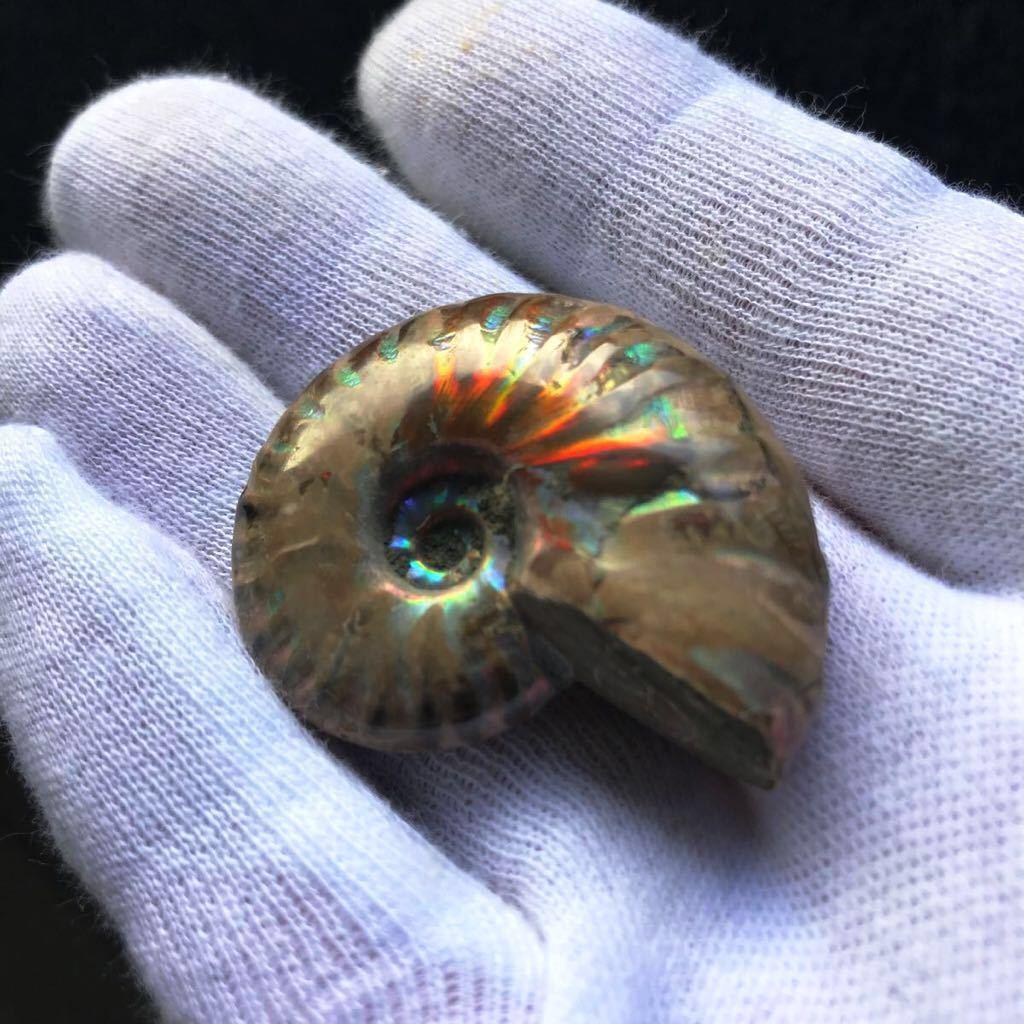 ブルー発色が強いオパール化 アンモナイト化石 20g 多彩な発色が特徴的な虹色の遊色 マダガスカル産 ピカピカ磨き_画像2