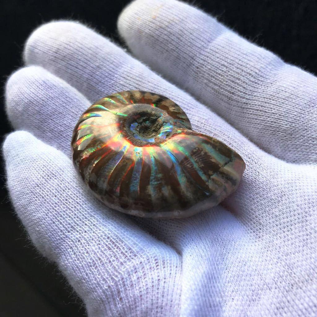 ブルー発色が強いオパール化 アンモナイト化石 20g 多彩な発色が特徴的な虹色の遊色 マダガスカル産 ピカピカ磨き_画像3