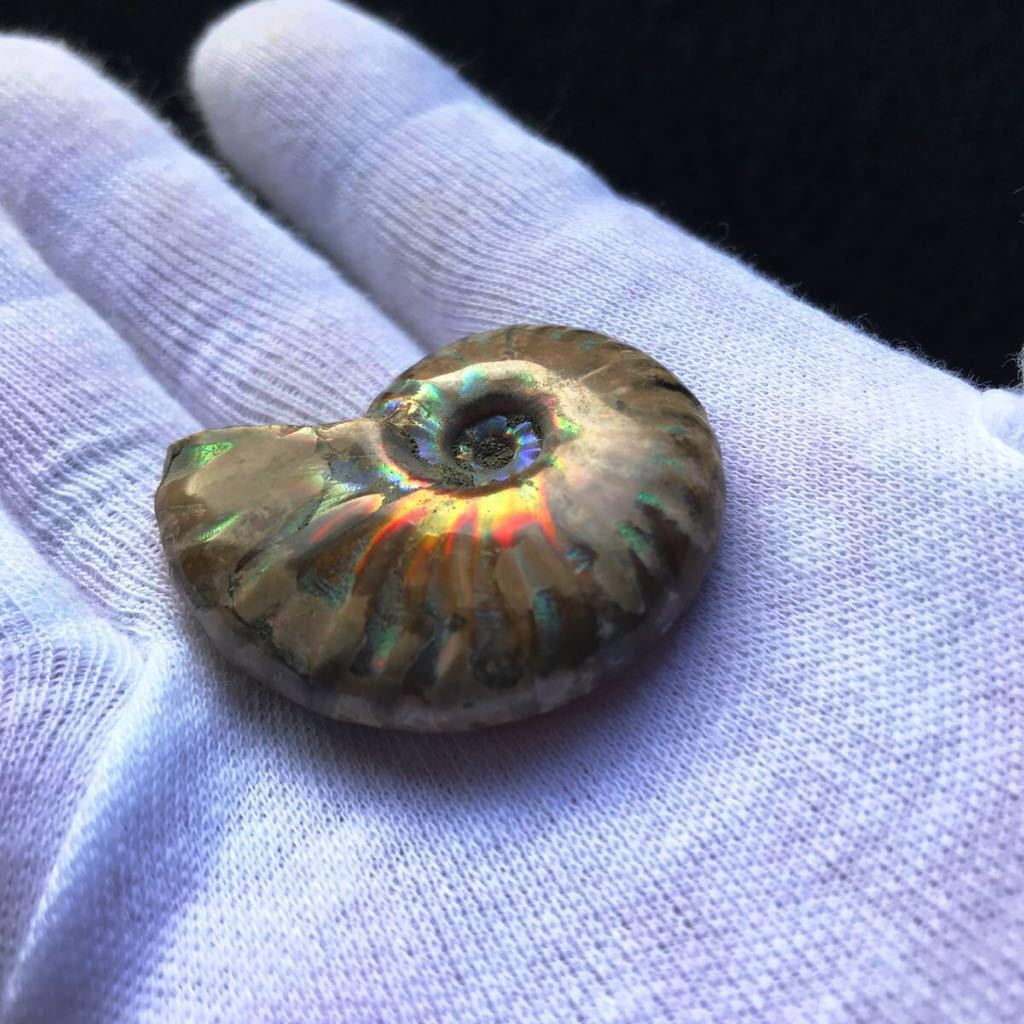 ブルー発色が強いオパール化 アンモナイト化石 20g 多彩な発色が特徴的な虹色の遊色 マダガスカル産 ピカピカ磨き_画像4