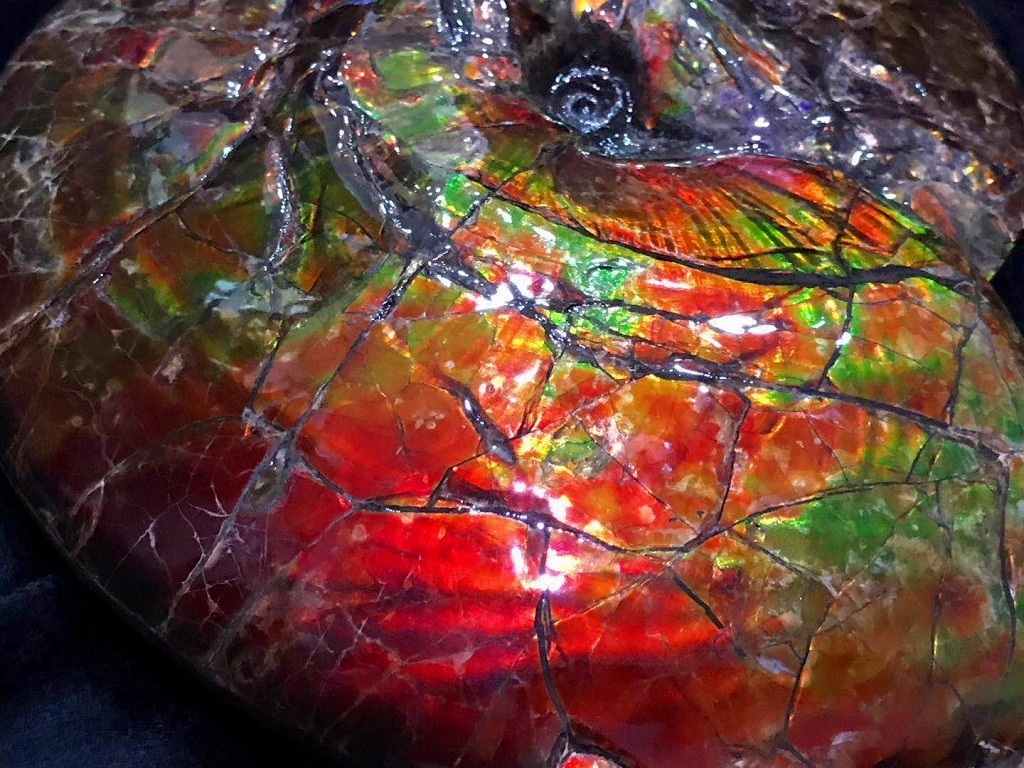 ★超天然★限定品★カナダ産GFM 化石 アンモライト完全体! レッド&オレンジゴールド! 美麗フラッシュ!巨大2.25kg★255mm_画像2