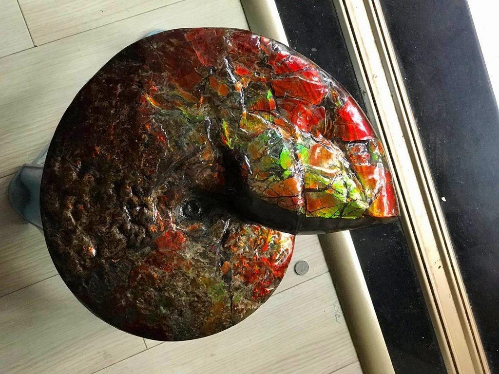 特別価額★博物館級★証明証付き超天然★カナダ産GFM 化石 アンモライト完全体! レッド&オレンジゴールド!超巨大7.0kg★370mm_画像4