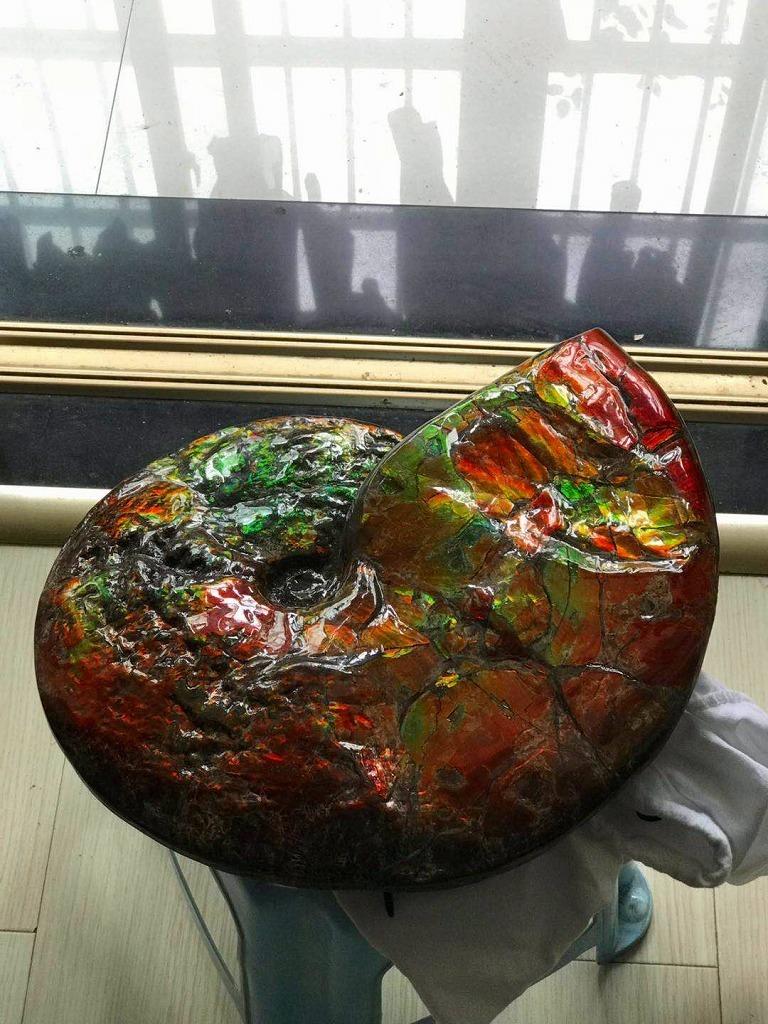 特別価額★博物館級★証明証付き超天然★カナダ産GFM 化石 アンモライト完全体! レッド&オレンジゴールド!超巨大7.0kg★370mm_画像6