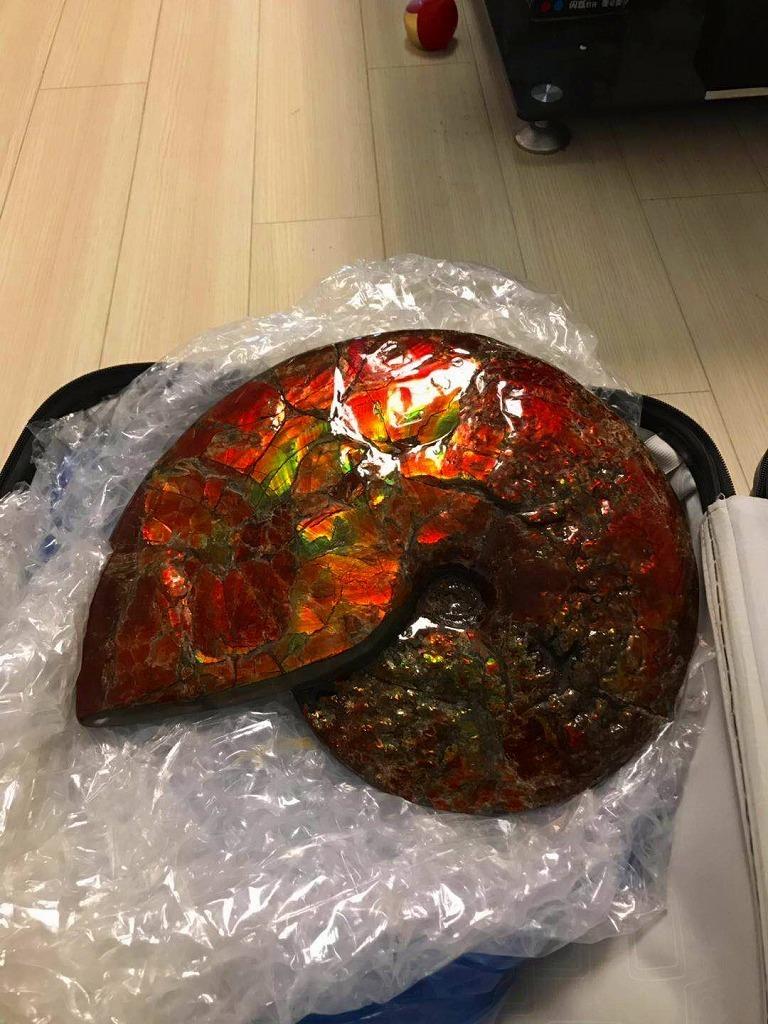特別価額★博物館級★証明証付き超天然★カナダ産GFM 化石 アンモライト完全体! レッド&オレンジゴールド!超巨大7.0kg★370mm_画像3