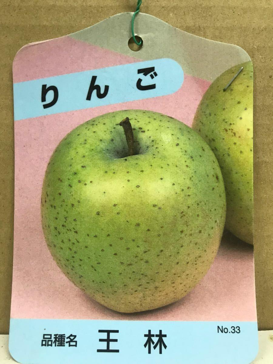 林檎(王林りんご)苗木_画像1