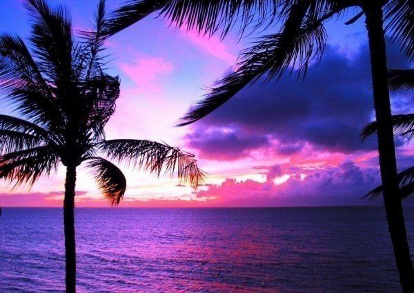 ハワイ オアフ島のパームツリーとパープルサンセット 夕焼け ヤシの木 海 絵画風 壁紙ポスター 特大A1版830×585mm はがせるシール式 033A1 印刷物&ポスター&その他