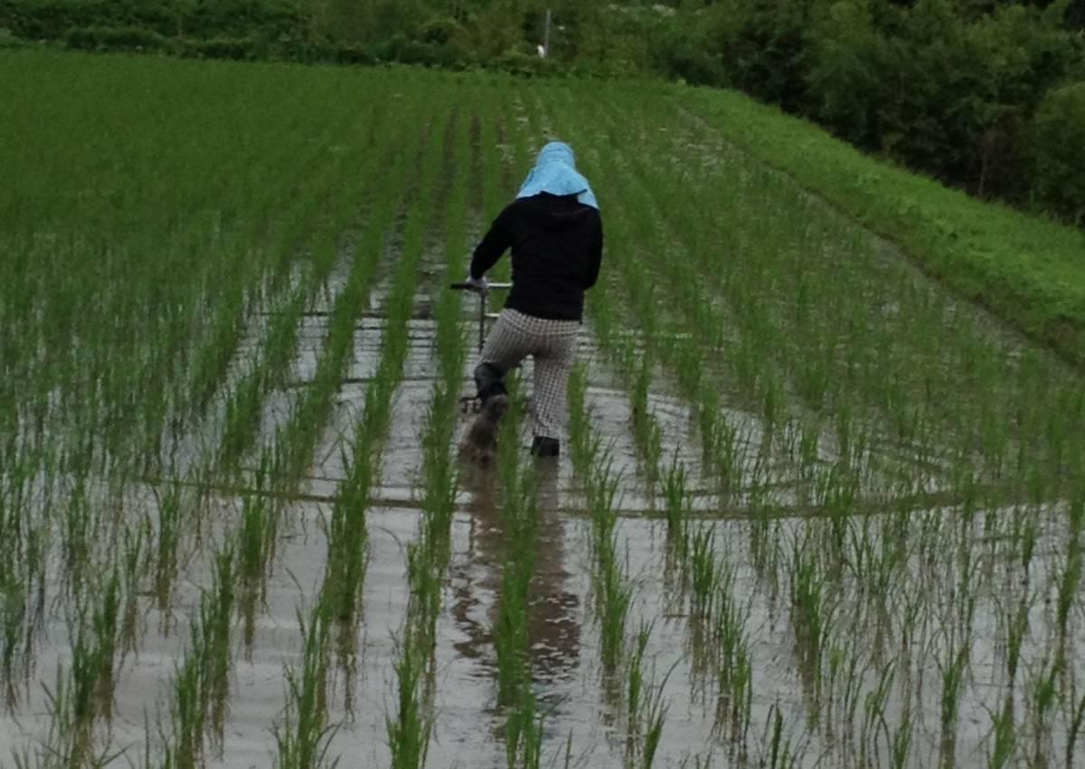 除草作業中の風景