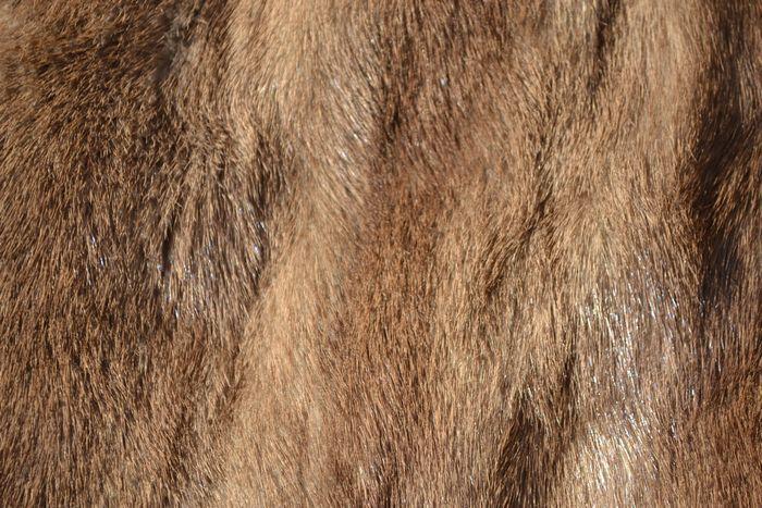 良品! サガミンク SAGA MINK 超高級 金サガ ミンクファー ハーフコート (レディース) ブラウン size11_画像5