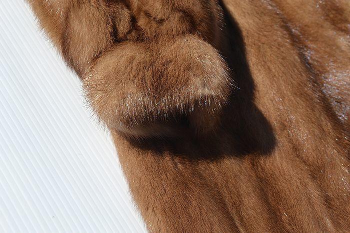 良品! サガミンク SAGA MINK 超高級 金サガ ミンクファー ハーフコート (レディース) ブラウン size11_画像4