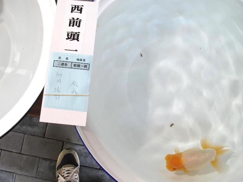 ◆◇バンビーーノ◇◆【品評会 「前頭」入賞弐歳魚】愛媛・竹内誠司氏_画像2
