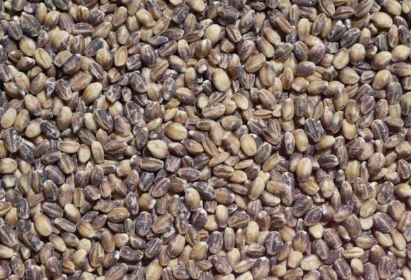 【2021年産】 もち麦/ダイシモチ/1キロ/無農薬/除草剤不使用/無化学肥料/国産/埼玉県産/丸麦(炊飯器等で調理可能)_この状態でそのまま炊飯器等で調理できます