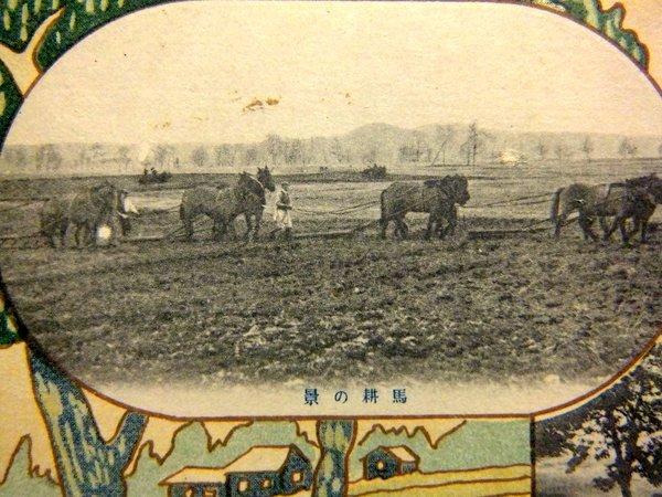 戦前 絵葉書 馬耕の景,放牧の景 北海道廳  / 北海道庁 農業 家畜 牛_画像2
