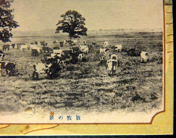 戦前 絵葉書 馬耕の景,放牧の景 北海道廳  / 北海道庁 農業 家畜 牛_画像3