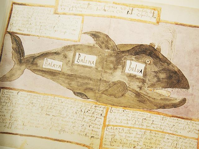 【洋書】THE WHALE BOOK【アドリアーン・クーネン】ADRIAEN COENEN クジラ 魚 図鑑 海洋野生生物 THE FISH BOOK 水彩画_画像4