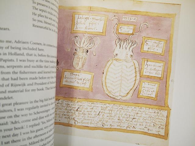 【洋書】THE WHALE BOOK【アドリアーン・クーネン】ADRIAEN COENEN クジラ 魚 図鑑 海洋野生生物 THE FISH BOOK 水彩画_画像3