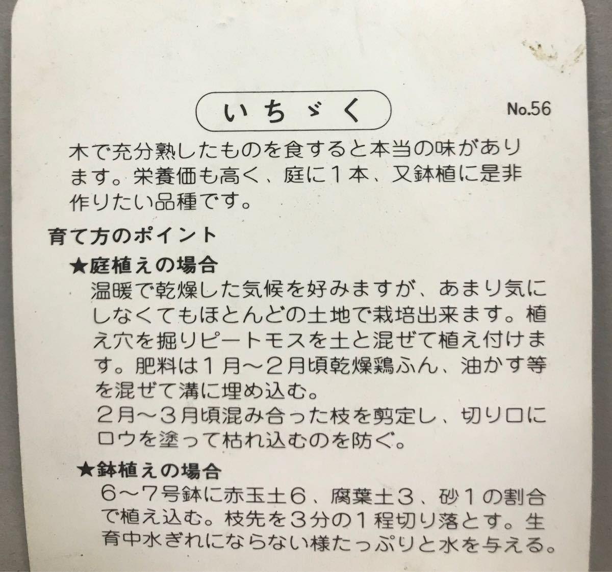 いちじく(無花果)日本種苗木_画像2