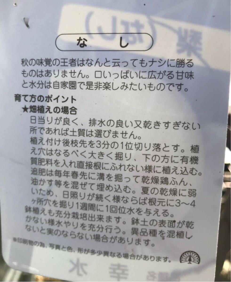 幸水梨 苗木_画像2