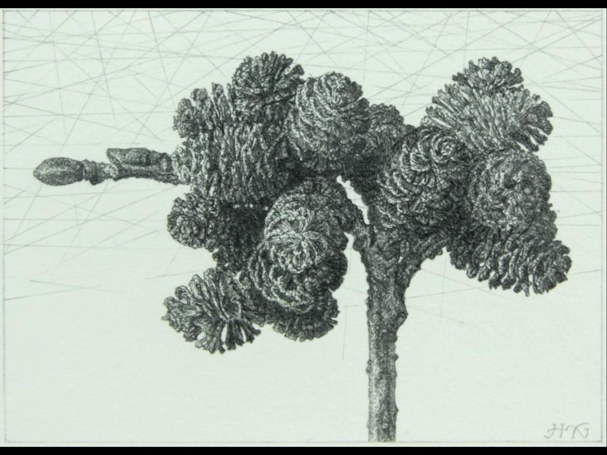 ◆澄◆ 真作保証 野田哲也 「谷地棒の木の実」 肉筆鉛筆画 直筆サイン 三越取扱シール [N