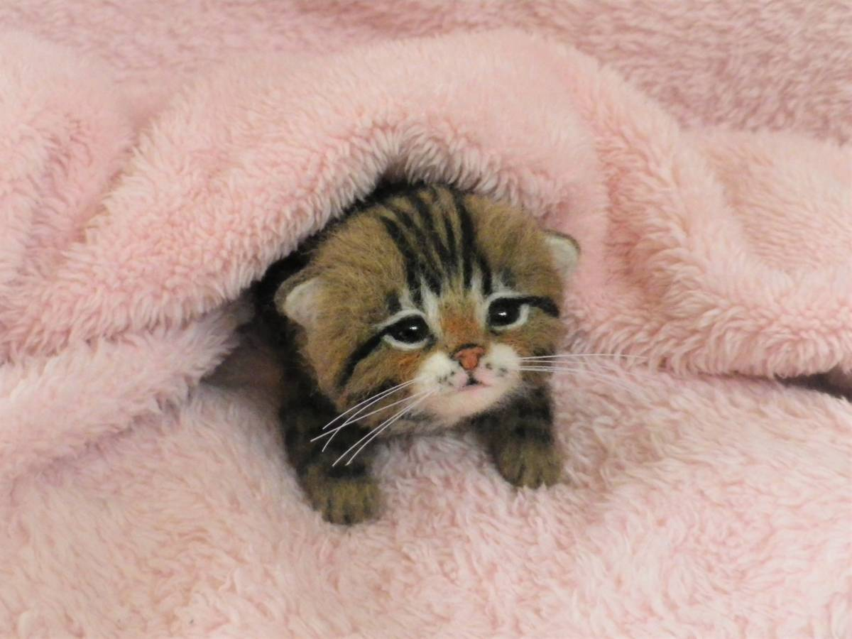 funwari■□■ 羊毛フェルト 赤ちゃん猫 キジトラ ふせ見上げポーズ ハンドメイド_画像3