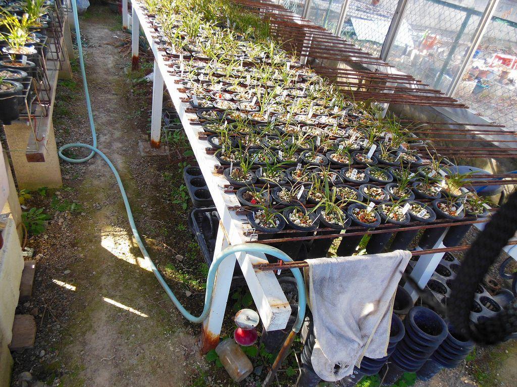 園芸用温室2X4間、激安。条件有り。アルミサッシ、ガラス張り、堅牢。_画像9