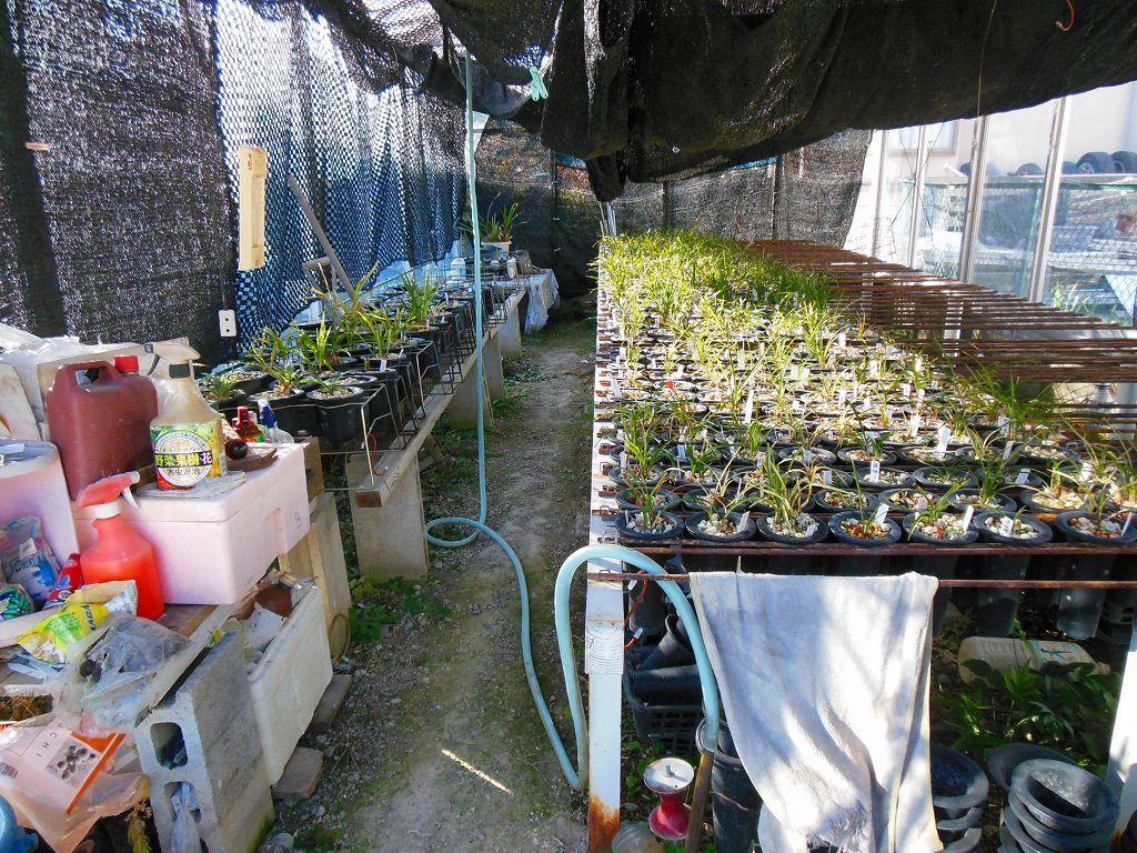 園芸用温室2X4間、激安。条件有り。アルミサッシ、ガラス張り、堅牢。_画像3