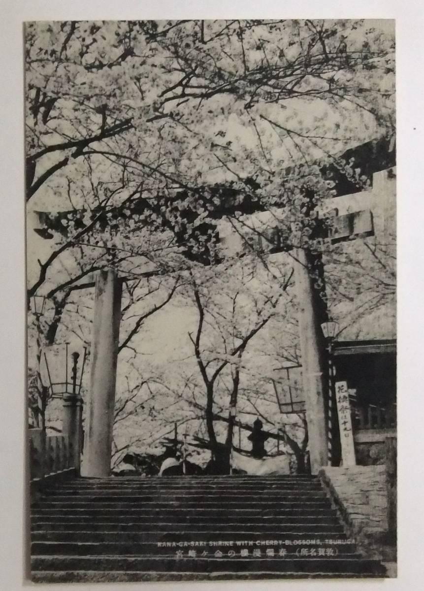 絵葉書戦前 敦賀名所 春爛漫 桜の金ヶ崎宮