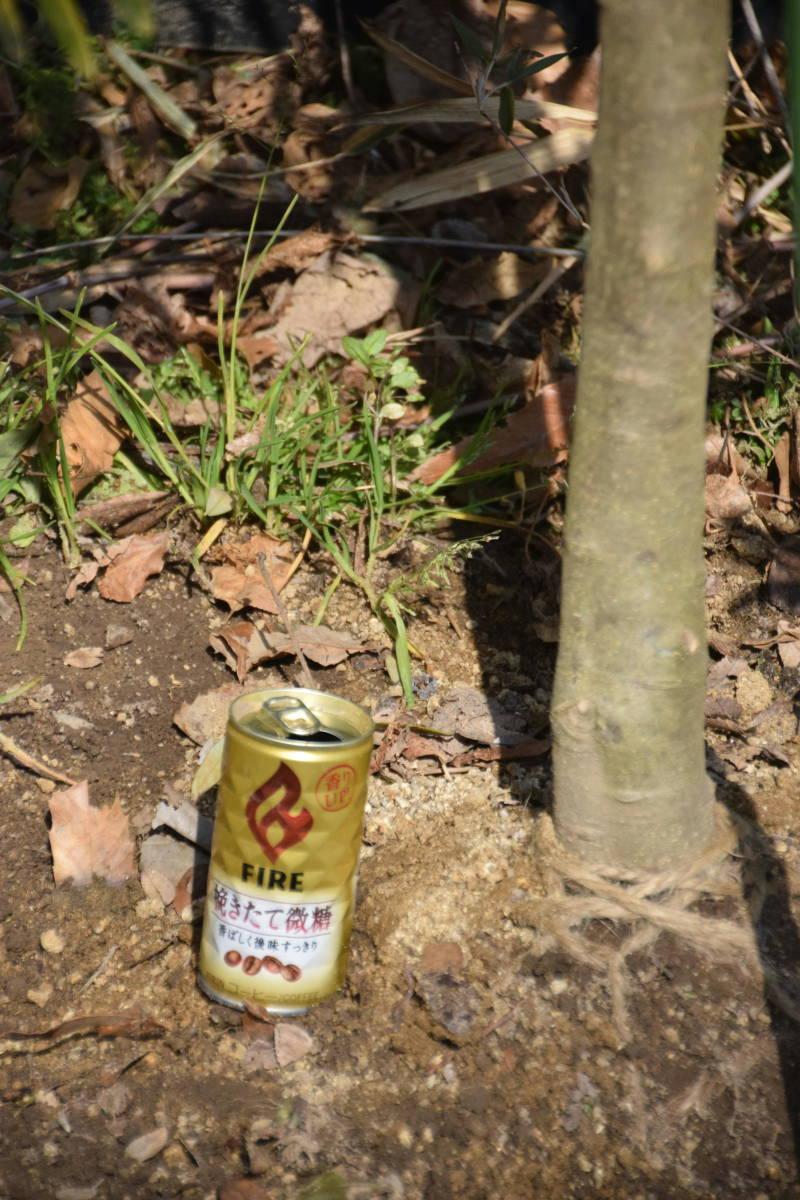 ☆小豆島で育んだ オリーブ シプレッシーノ  2.0m_画像4