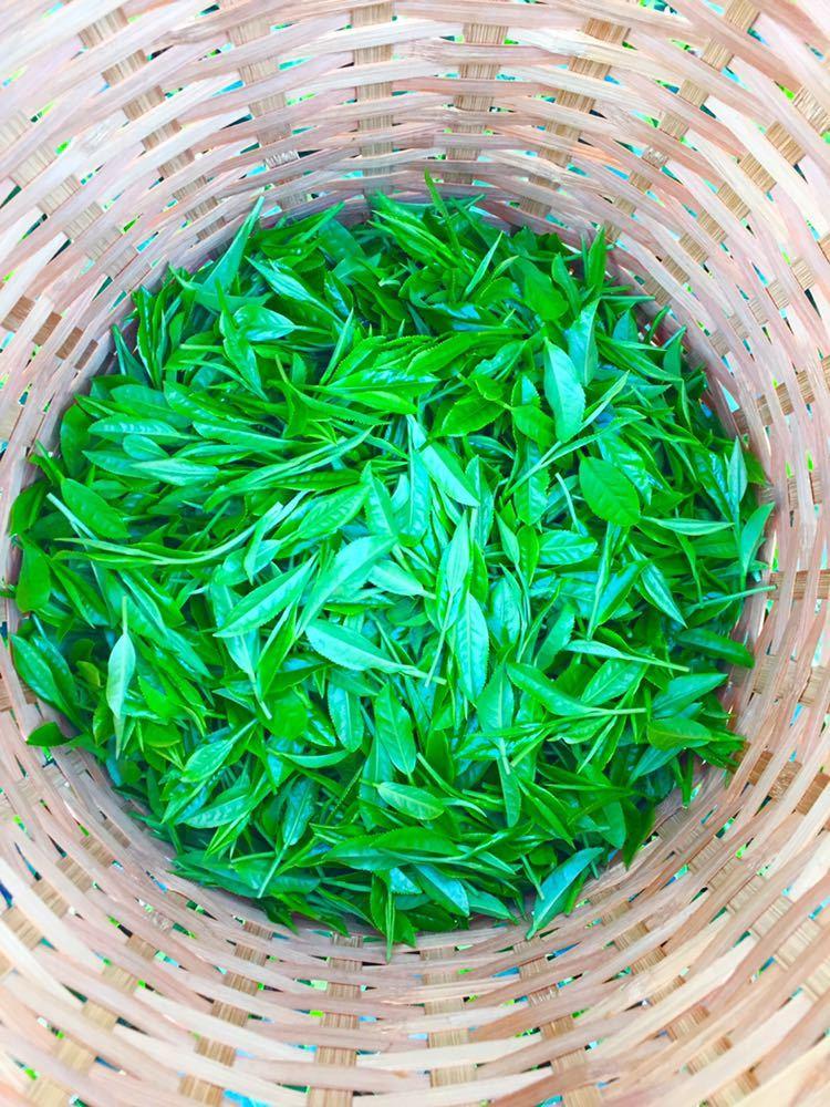 【産地直送】一番茶摘採期飲み比べセット/お茶/深蒸し茶 100g×3種類 静岡_画像3