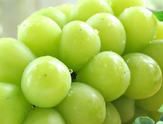 8【送料無料】山梨県産 シャインマスカット5kg8房入り 【予約商品】ギフト 贈り物 景品 内祝 手土産 大量 残暑見舞い ブドウ 葡萄