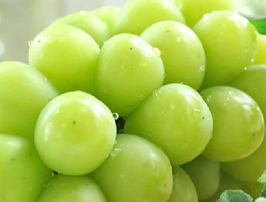 4【送料無料】山梨県産 シャインマスカット2房1.2kgアップ 【予約商品】ギフト 贈り物 内祝 手土産 大量 残暑見舞い ブドウ 葡萄