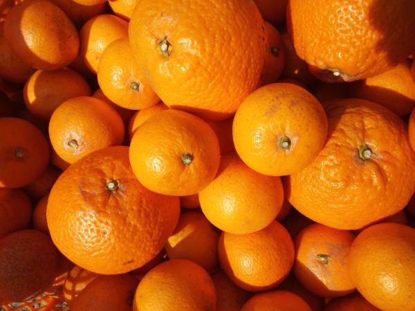 和歌山 清見オレンジ (訳あり)10キロ