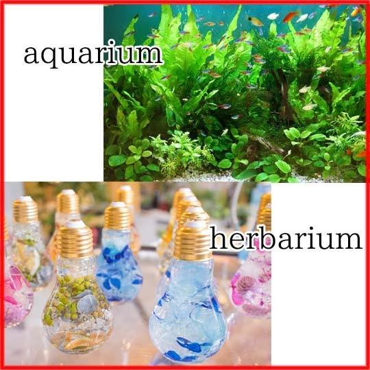 ピンセット 水草 アクアリウム ハーバリウム アクセサリー 簡単 ADA水槽へ 餌やり ストレート 長い ステンレス 5本 セット 新品 即決_画像3