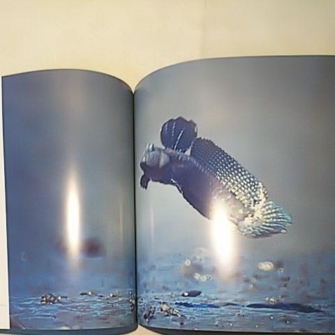 わが心原景 有明海 音成三男 写真集 PHOTOMESSAGE ARIAKEKAI 佐賀新聞社 初版 全63ページ_画像6