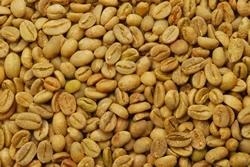 【10㎏】コーヒー生豆 エチオピア イリガチャフG-4ナチュラル 生豆 モカ スタンダードコーヒー 自家焙煎 カフェ 送料無料_画像2