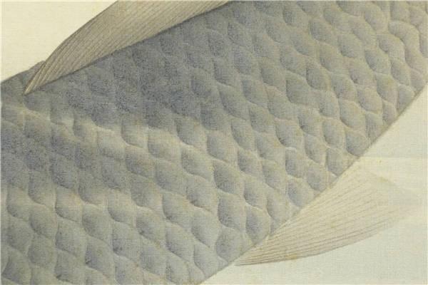【真作】【華】佳品 京都の日本画家 望月玉成 『松鯉図』 二重箱 共箱 エ3318_画像9