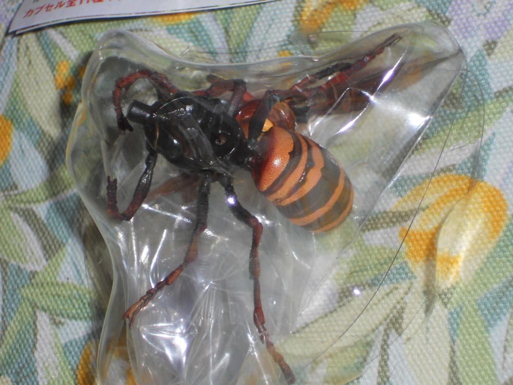 オオスズメバチ 原色日本昆虫図鑑1_画像2
