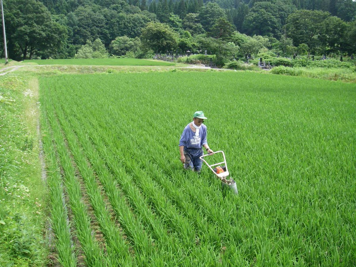 暑い中での農作業