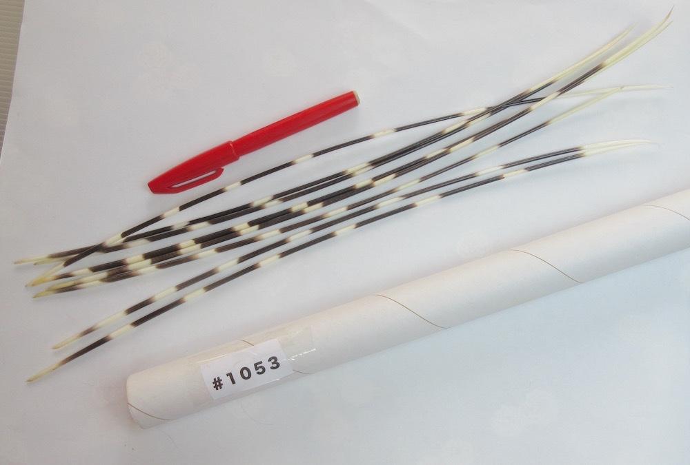 ヤマアラシの針 アフリカ産 米国輸入 #1053_画像2