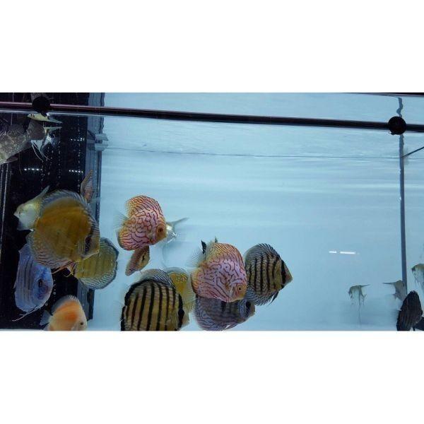 アロワナライト でんらい アジアアロワナ LED 水中照明 水中蛍光灯 アクアリウム 過背金 90cm水槽 型番AK90_画像10