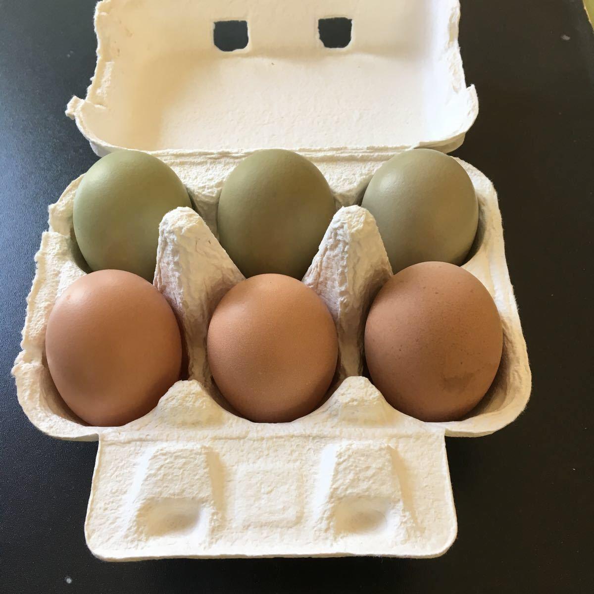 烏骨鶏 翡翠鷄 五個のお値段で1つ割れ保証です