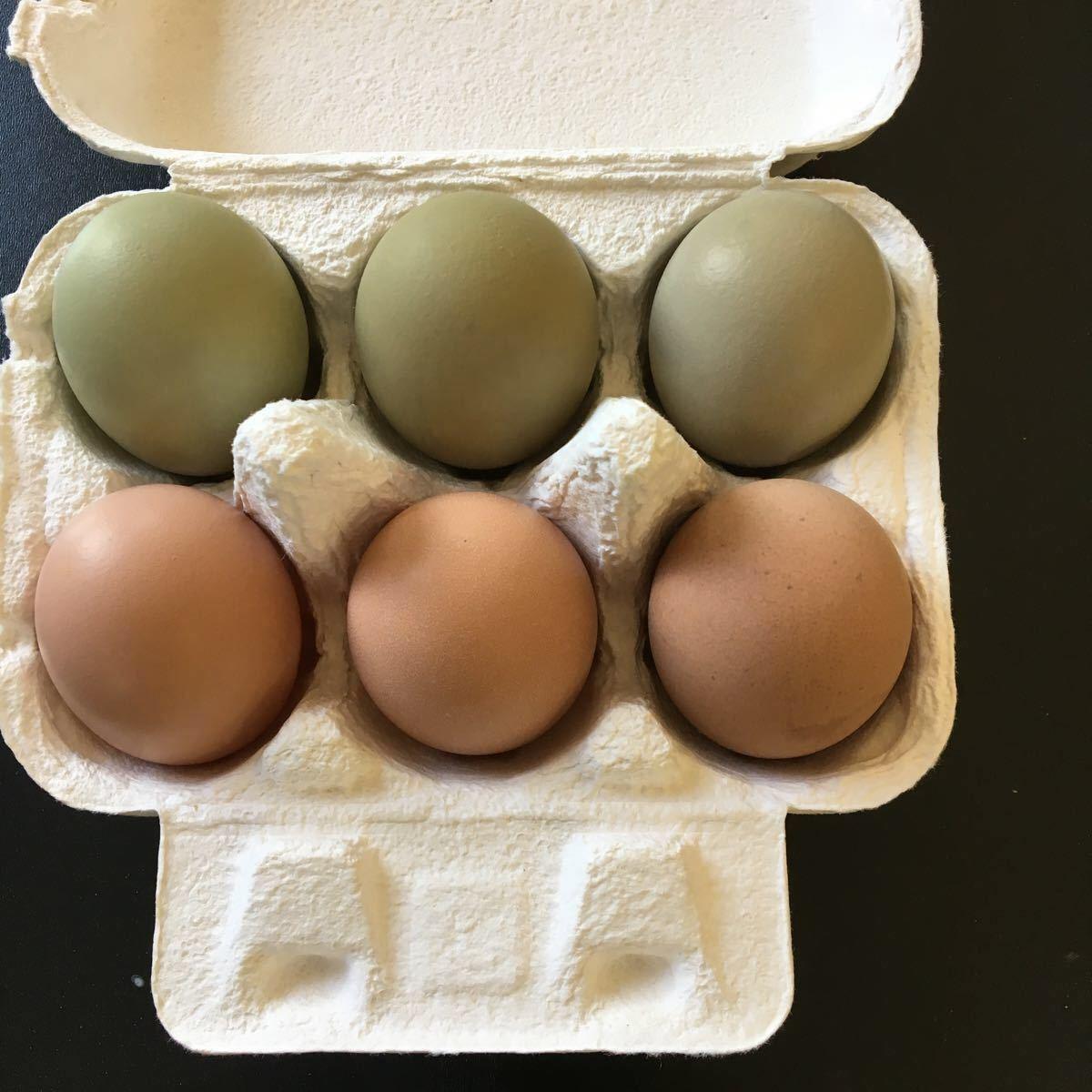 烏骨鶏 翡翠鷄 五個のお値段で1つ割れ保証です_画像2