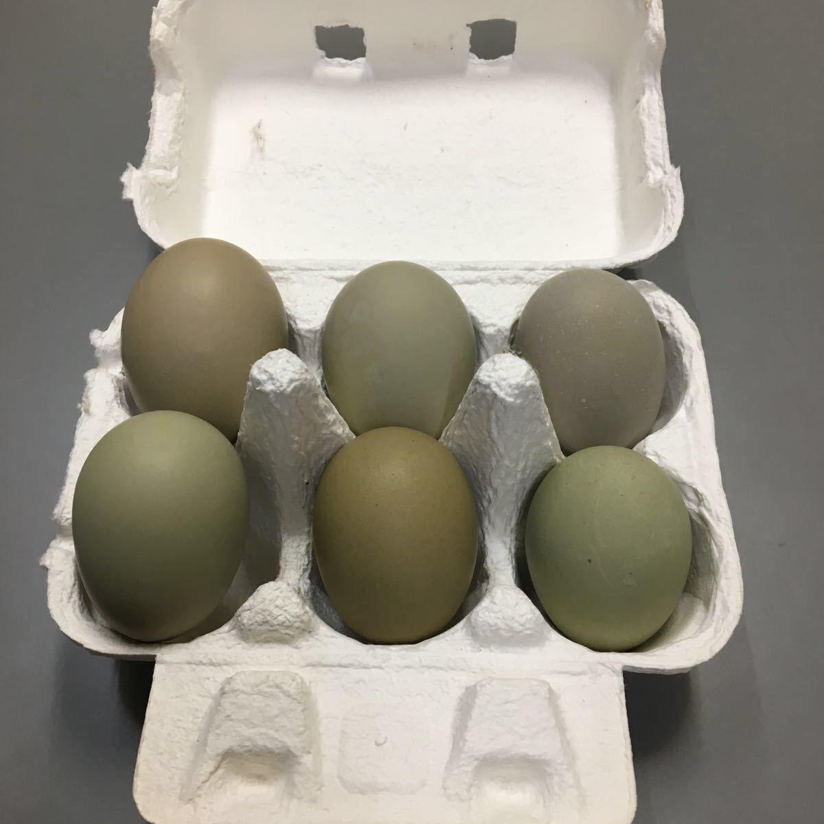 翡翠鳥 烏骨鶏 アローカナ卵 5個プラス1個_画像2