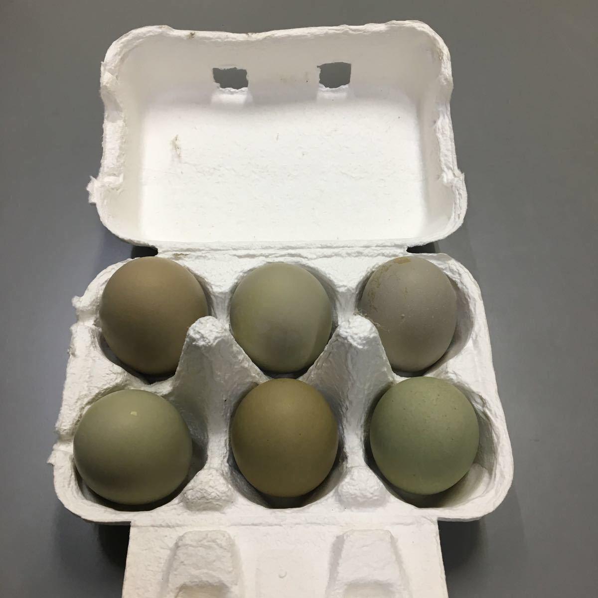 翡翠鳥 烏骨鶏 アローカナ卵 5個プラス1個